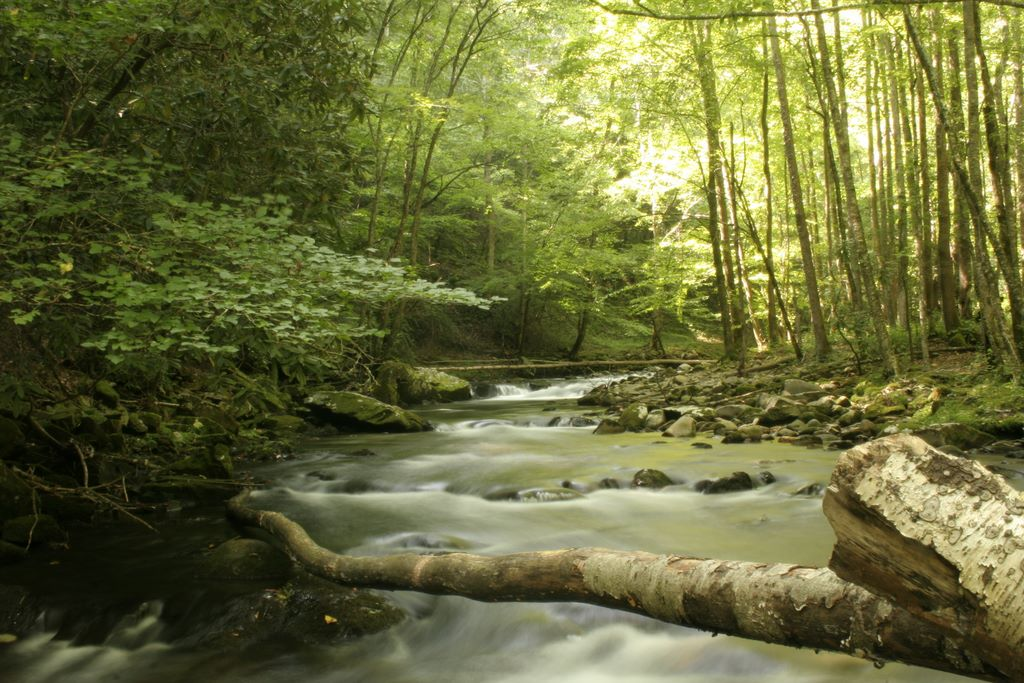 Bradley Fork - Tributary of the Oconaluftee River in the Great Smoky Mountains National Park