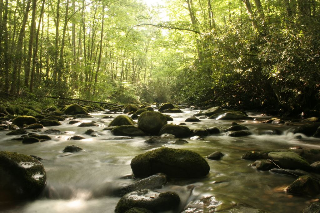 Bradley Fork - Great Smoky Mountains National Park - tributary of the Oconaluftee River