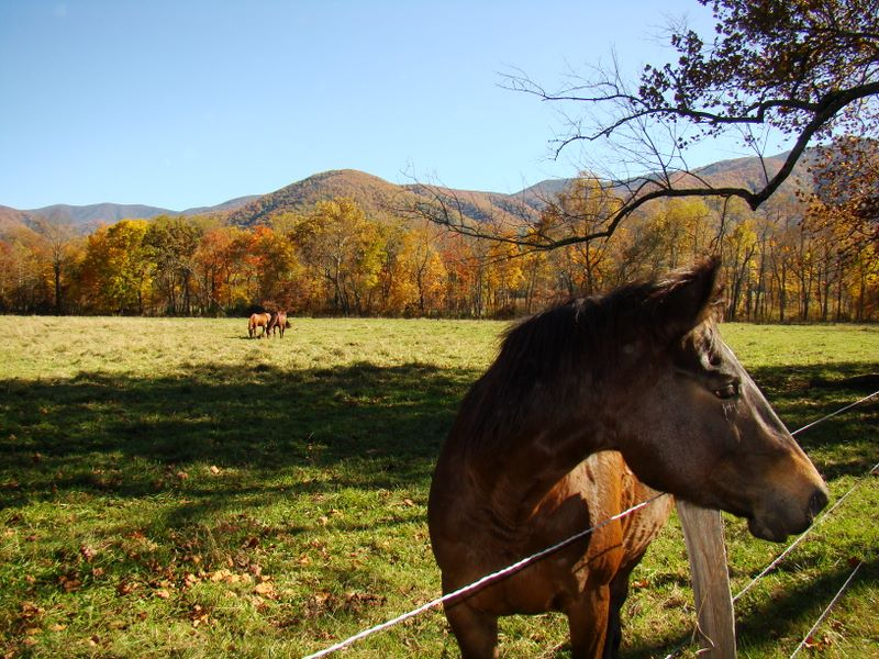Cades Cove - Sparks Lane - horse in the pasture