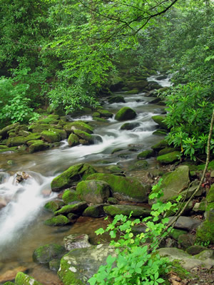 Cosby Creek   Photo By Jennifer Bulava   NaturePhotoStore.net Click To View  And Purchase