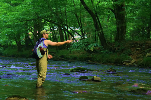 Jay Fradd fly fishing on Cataloochee Creek in the North Carolina portion of the Great Smoky Mountains National Park
