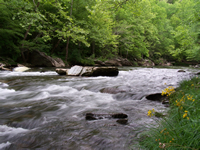 Middle Prong Of The Little Pigeon River in Pittman Center, TN. This river provides excellent rainbow trout fishing and smallmouth fishing as you head downstream. This lot is located in Riversong Estates - a development in the area. Photo by Jay Fradd.