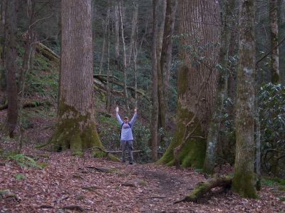 Jay hiking in Ramsay Cascades in the Great Smoky Mountains National Park - next to some old growth Tulip Poplar Trees